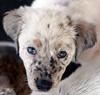 Peppermint Patty- July 10, 2010 - Carolyn Yaschur