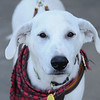 Homer - October 2, 2010 - Stuart Phillips d/b/a Grateful Dog Photo / Video / Design
