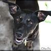 Shasta-6/27/10-Chloe Pix Photography