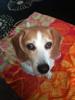 Snoopy - 6/27/10 - Melinda Briggs