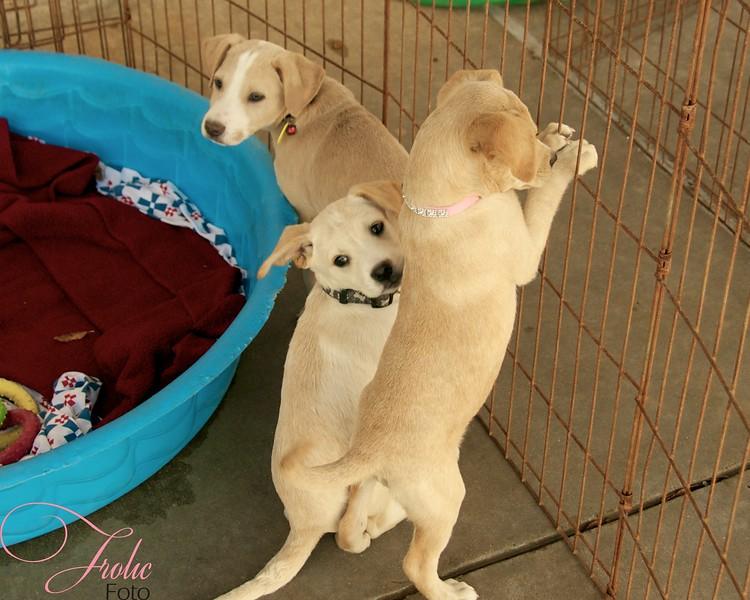 Office Puppies, 10/29/10, Sylvia Cavazos-Malamon, Frolic Foto