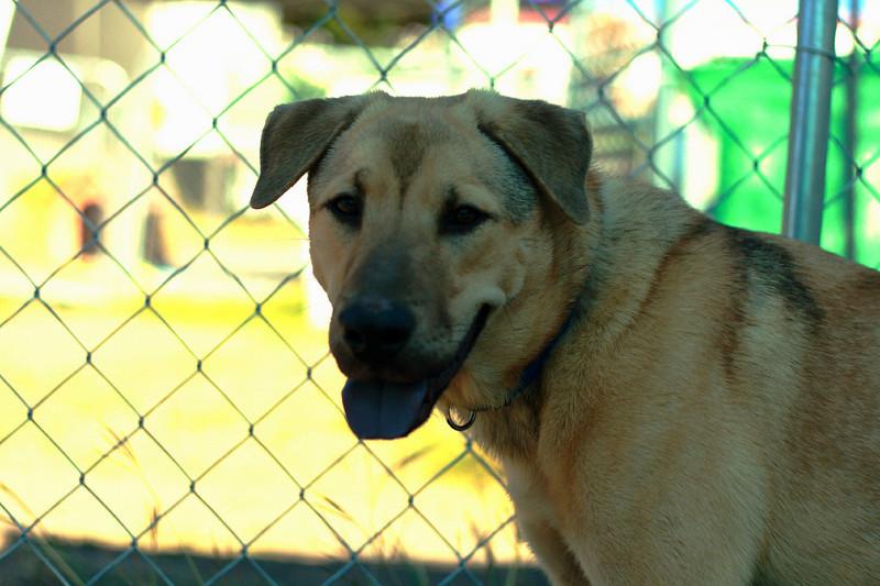 Chuy - 11/6/2010 - Jessica Marsh