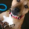 Laffy Taffy - 12/21/2010 - Summer Huggins