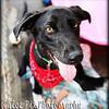 Farley/7-24-10/Chloe Pix Photography