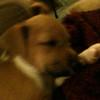 Ramona - 8/31/10 - Kimberly Deckard