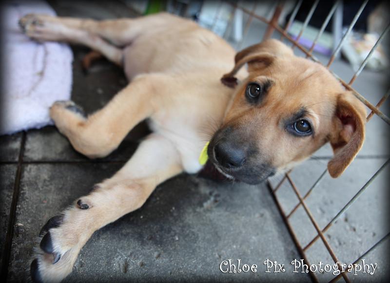Otis - 7/30/10-Chloe Pix Photography