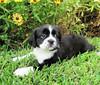Princess Daisy - 9/7/10 - Jennifer Thomas