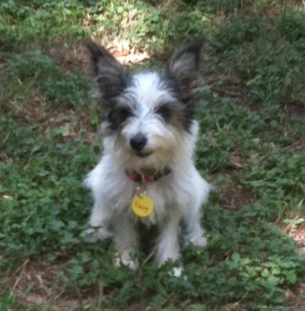 Little Daisy in the yard.