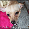 Champ/7-24-10/Chloe Pix Photography