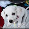Clio - 7/30/10-Chloe Pix Photography