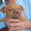Ginger - 7/20/10 - Whitney Price