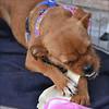 Scruffy - 11/20/2010 - Summer Huggins