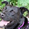 Dixie-6/25/10-Chloe Pix Photography