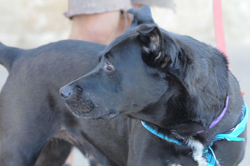 Dixie - October 2, 2010 - Stuart Phillips d/b/a Grateful Dog Photo / Video / Design