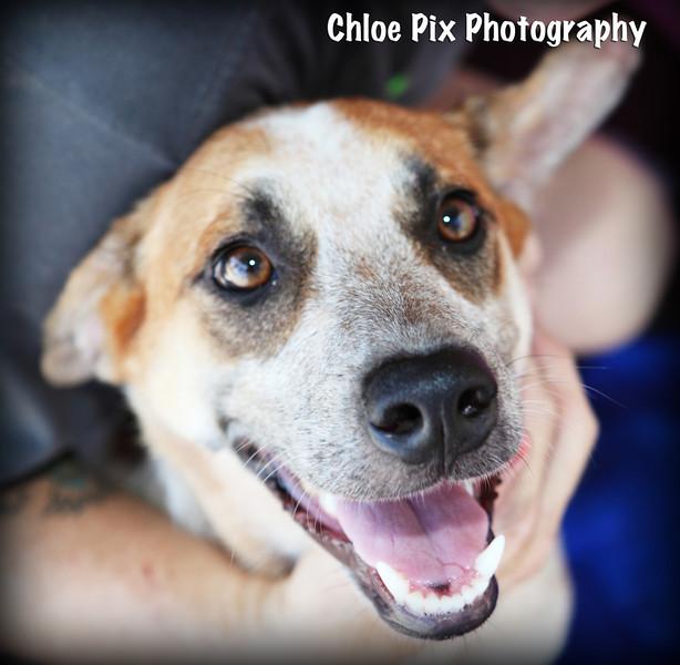 Gizelle-8/22/10-Chloe Pix Photography