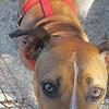 Cissy - 8/2/2010 - Sally Crewe