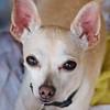 Peanut,  9/9/10, Sylvia Cavazos-Malamom, Malamon Photography