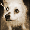 Angel/7-24-10/Chloe Pix Photography