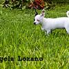 Spottie/Lady, Angela Lozano, 09/24/10