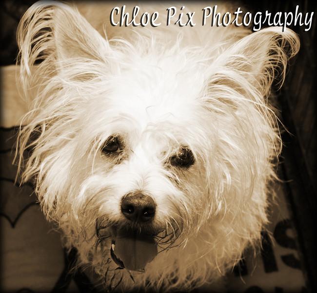 Spike/7-24-10/Chloe Pix Photography