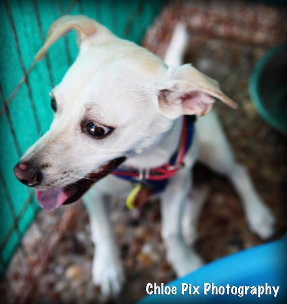 Sheila-8/22/10-Chloe Pix Photography