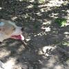 Marge, April 25 2010, Steve DeBono