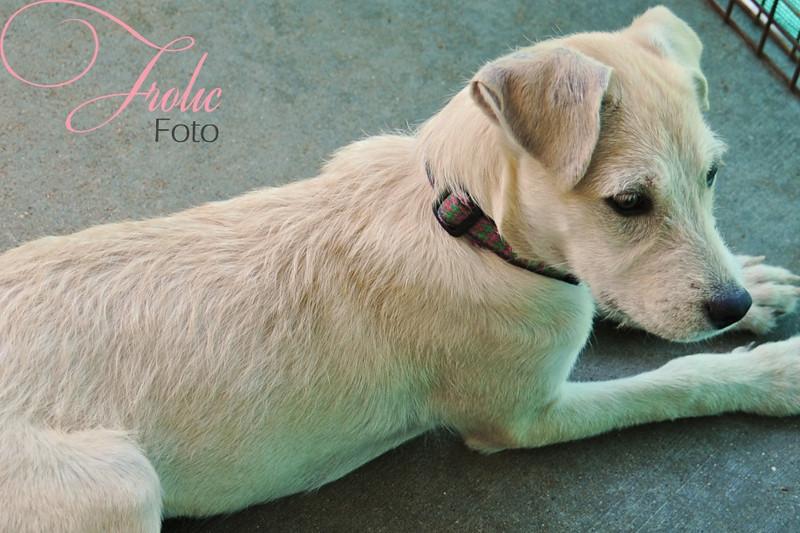 Goldie, 10/02/10, Sylvia Cavazos-Malamon, Frolic Foto