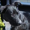 Zina (photographed 11/13/10 by Stuart Phillips d/b/a Grateful Dog Photo / Video / Design)
