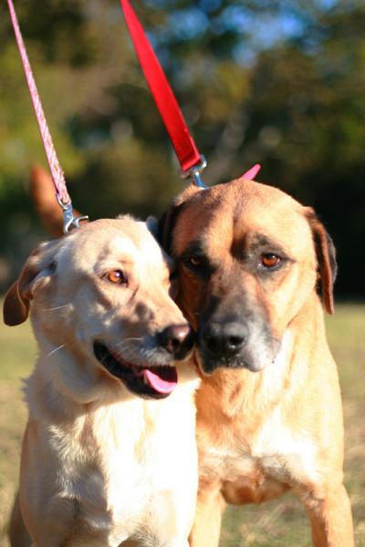 Glenda & Tommy Love Each Other 11/13/10 Jessica Marsh