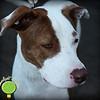 Kona/Lucy 11-13-10 Limelight Studio