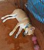 Rudolph — 09/17/2011 — Ana Cantu