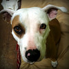 Brownie - 02/08/2011 - Summer Huggins