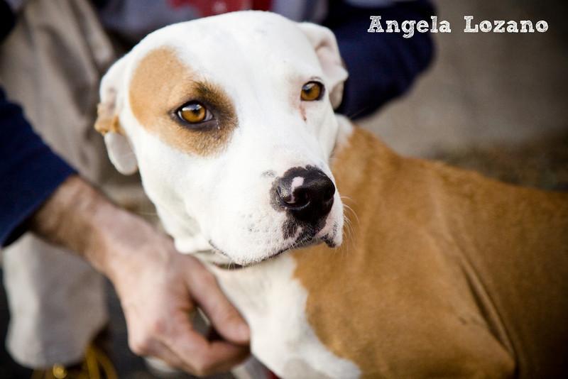 Brownie - 01/25/11 -  Angela Lozano