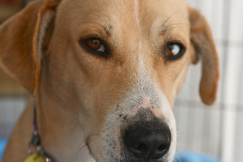 Ginger - 01/04/2011 - Summer Huggins