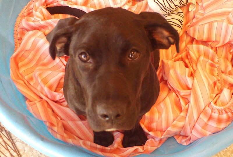 Zeus<br /> 7/11/11<br /> J Stewart