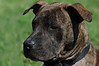 Boss - April 2010 - Stuart Phillips d/b/a Grateful Dog Photo / Video / Design