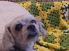 Angeline<br /> 7/11/11<br /> J Stewart