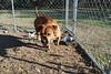 Winnie - 28Feb2011 - Meggan Carey