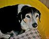 Buster, 2/19/11, Frolic Foto, Sylvia Cavazos-Malamon