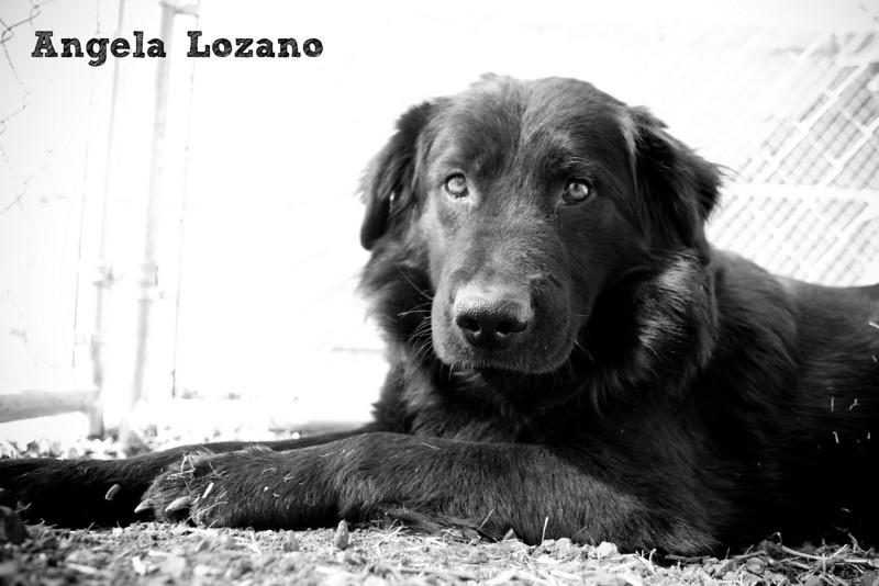 Cedric, Angela Lozano, 12/6/10