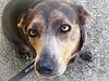Molly - 01/05/2011 - BBBS