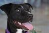 Sassy - (photographed July 30, 2010 by Stuart Phillips d/b/a Grateful Dog Photography)