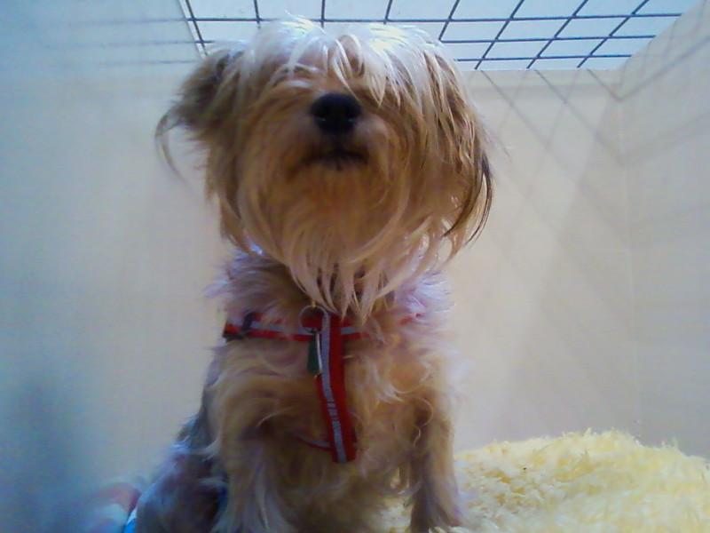 Millie - 11/13/11 - JStewart