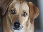 Daisy Beagle - 2/3/11