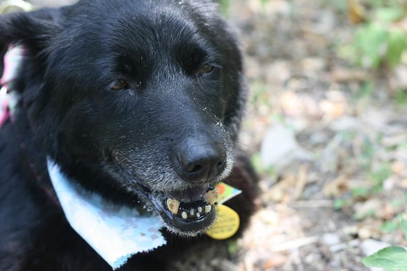 Bear - 05/09/2011 - Summer Huggins
