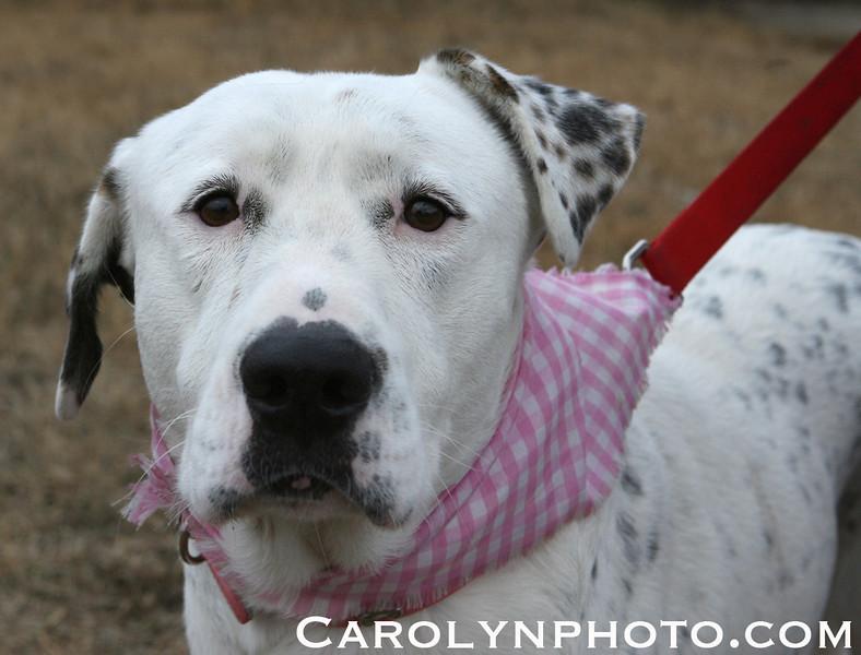 Delilah-- Jan. 16, 2011 -- Carolyn Yaschur