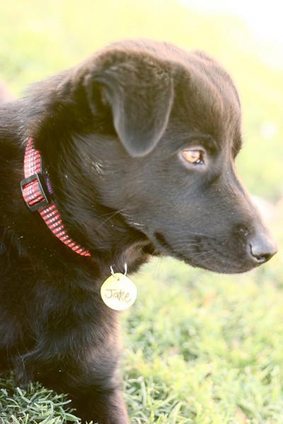 Jake - 04/12/2011 - Summer Huggins