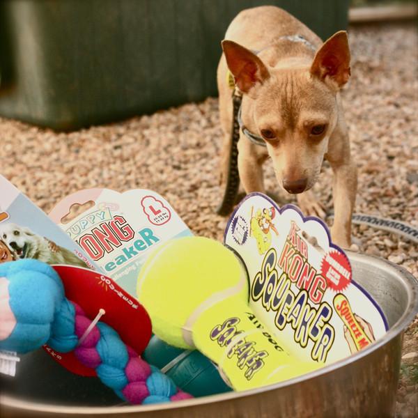 Pet Expo - 06/12/2011 - Summer Huggins (Tony)