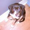 Hazel - 03/15/2011 - Gabrielle Smith