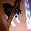 Wrigley - 03/15/2011 - Gabrielle Smith